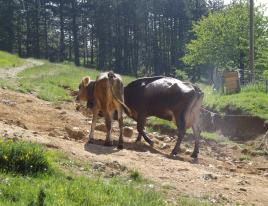 Gita in fattoria 2015